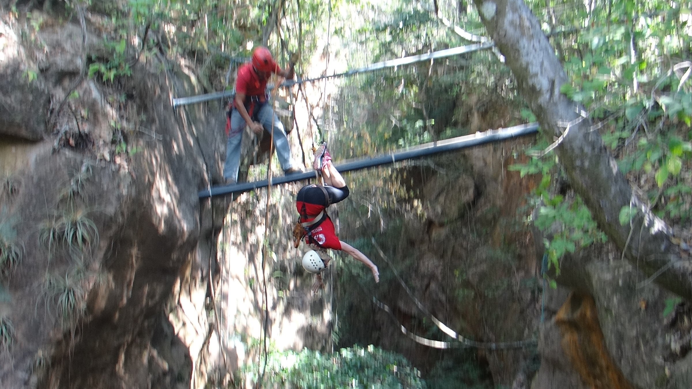Canopy am 257